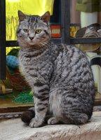 Cat in Kotor