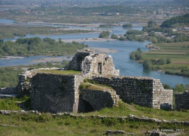 Rampant in Rozafa Castle (Shkodër, Albania, 2017)