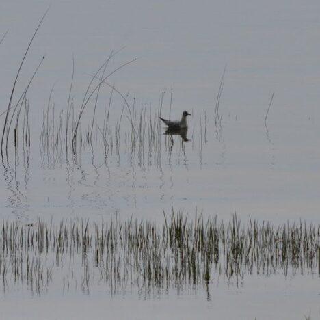 Lake Skadar photos