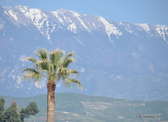 Palm tree and snowy mountain (Berat, Albania, 2017)