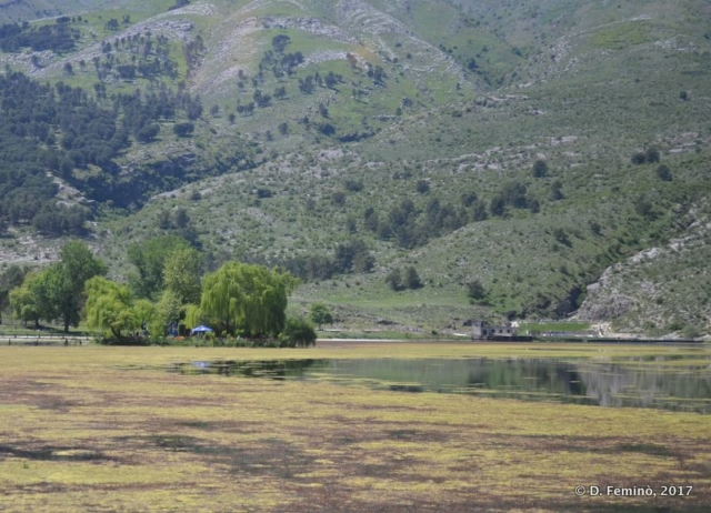 Marshy area along the road (Albania, 2017)