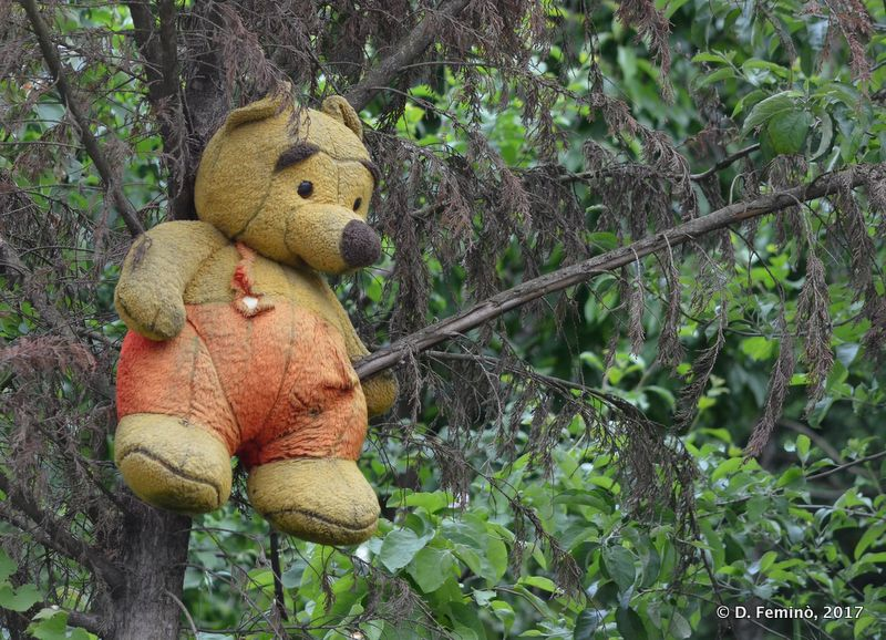 Teddy bear playing on a tree (Gjirokastër, Albania, 2017)