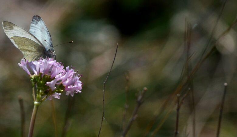 Butterfly in Blagaj