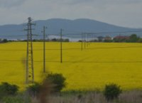 Yellow fields near Burgas