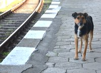 Dog in Karnobat station