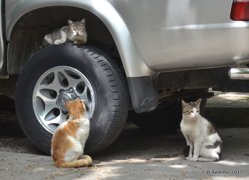 Three cats, one wheel (Varna, Bulgaria, 2017)