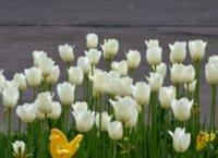 Flowers in sea garden