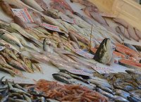 Fish stall in the market