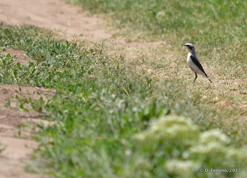 Bird in Orheiul Vechi (Trebujeni, Moldova, 2017)