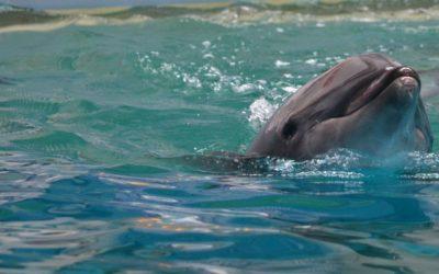 Dolphin in delfinarium