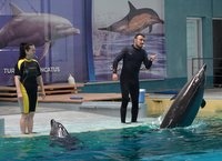 Dolphins' show