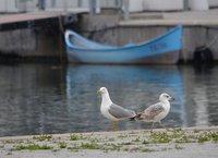 Constanta old harbour