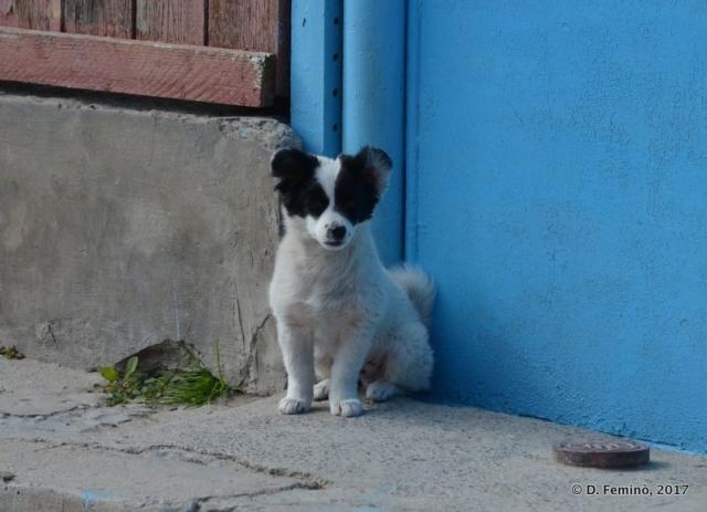 Puppy (Sulina, Romania, 2017)