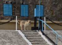 Guardian dog at Sulina weather station