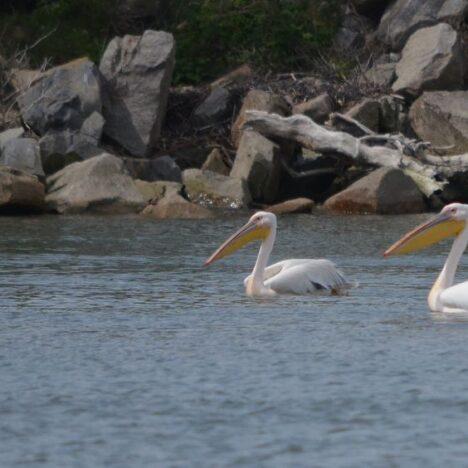 Danube delta photos
