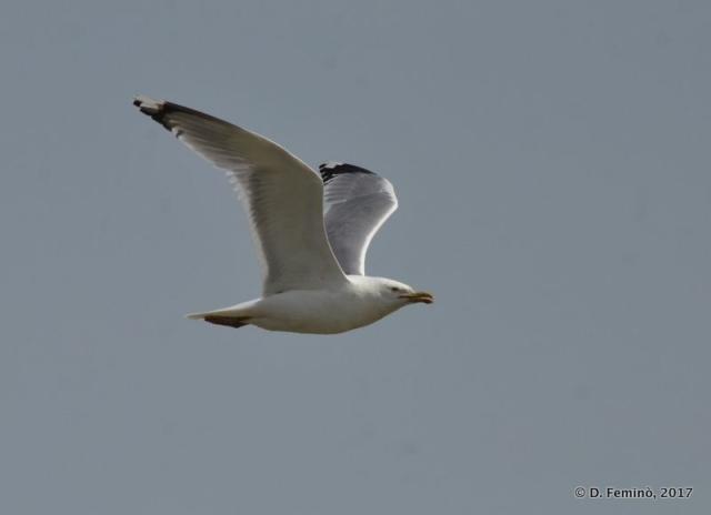 Seagull (Romania, 2017)
