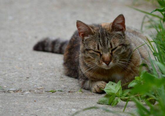 Cat in the park