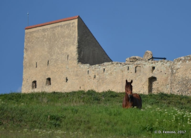 Horse and fortress (Rupea, Romania, 2017)