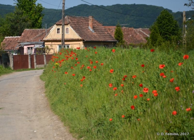 Rural view with poppies (Albești, Romania, 2017)
