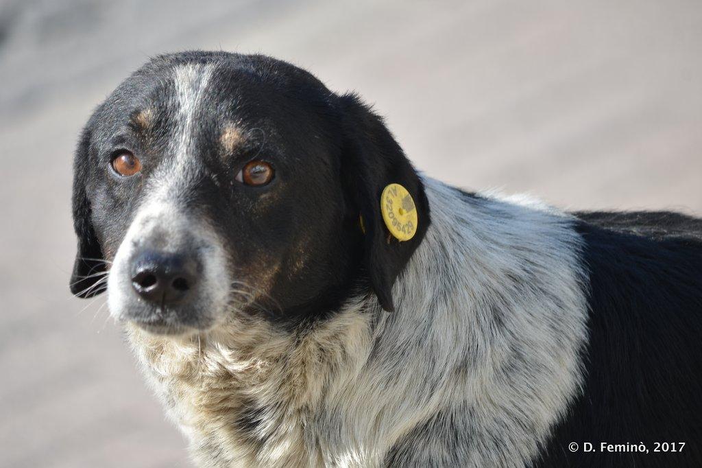 Shköder, A dog asking for something