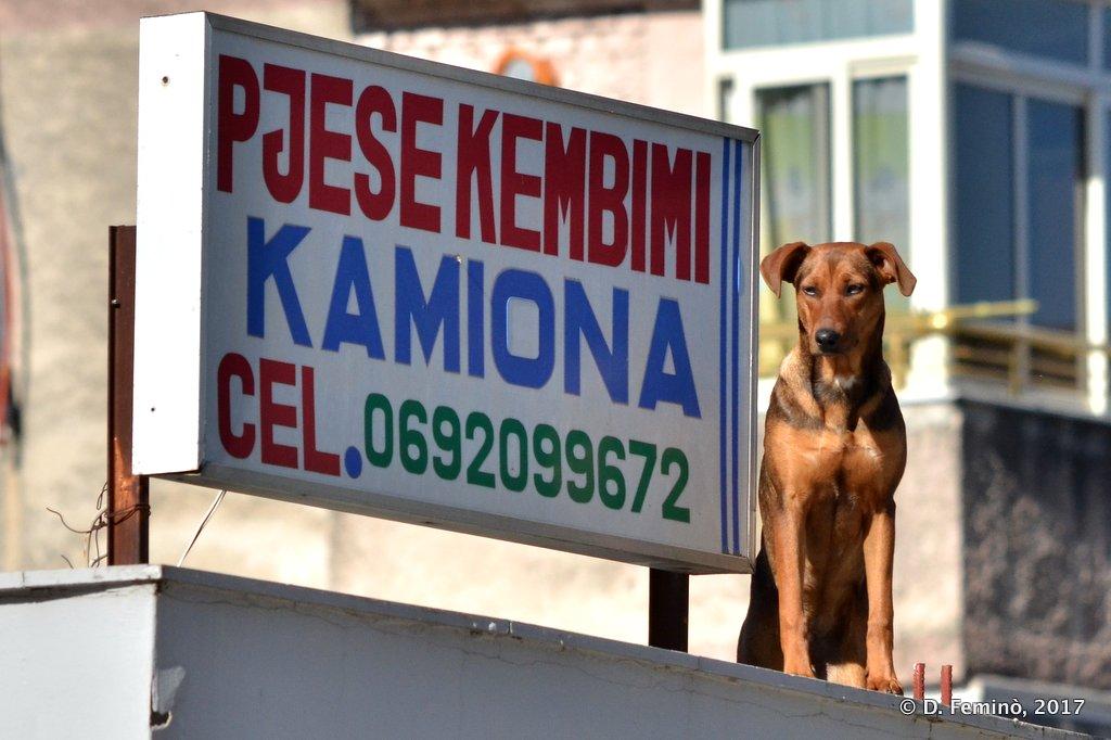Berat, Watch dog