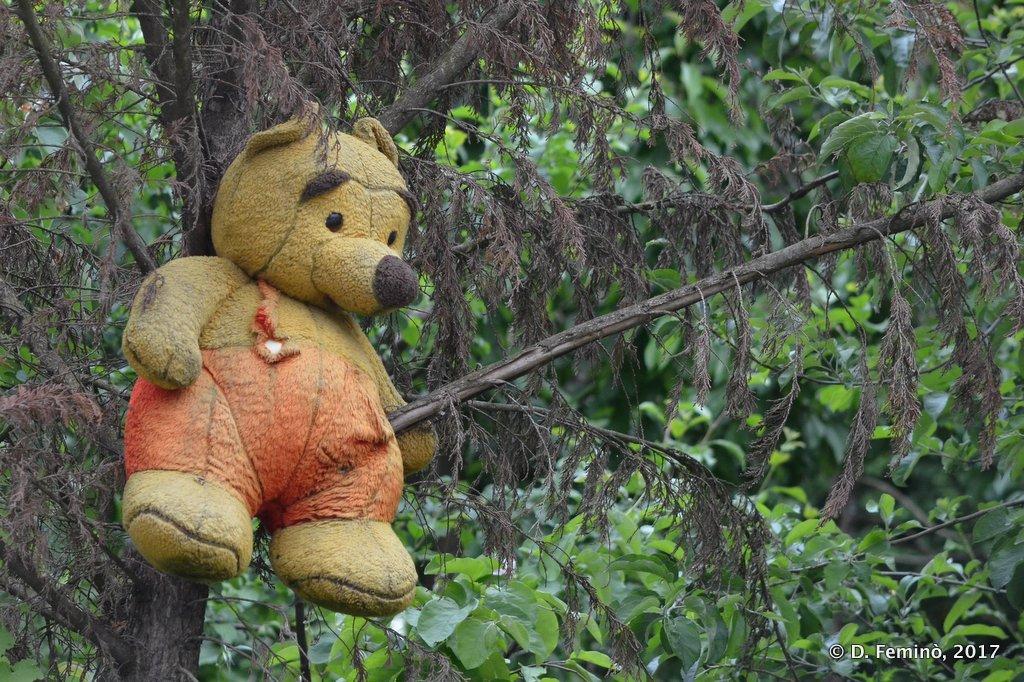 Gjirokastër, A huge teddybear living on a tree
