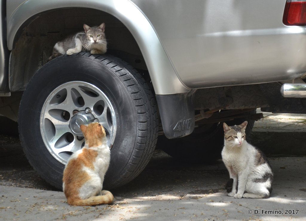 Varna, Bulgaria, Cats playing with a wheel