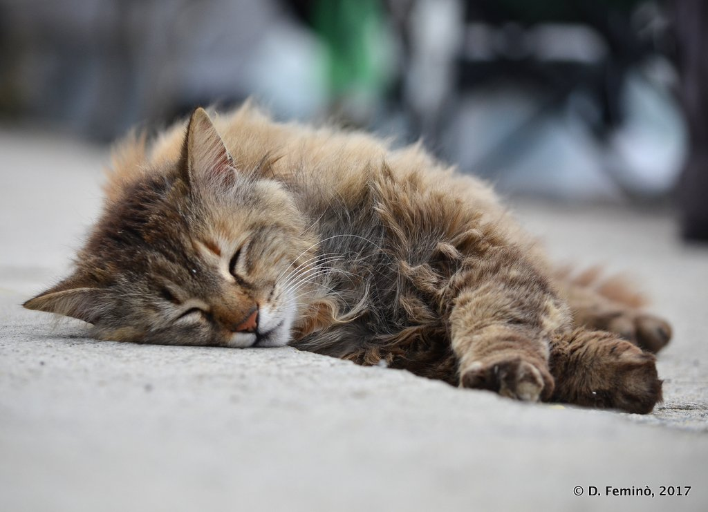 Varna, Bulgaria, Cat sleeping on the dock