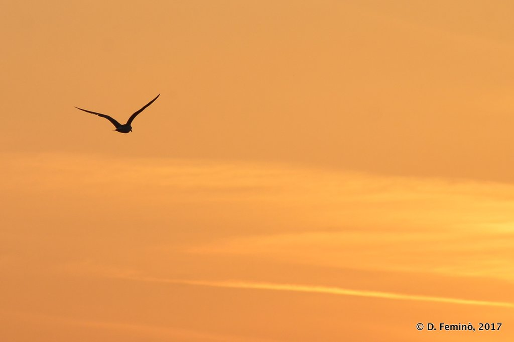 Alexandroupoli, Greece, Seagull at sunset