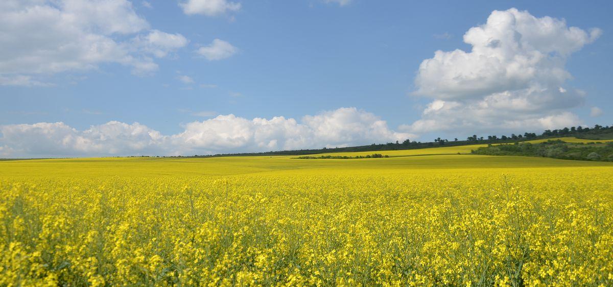Fields in Romania