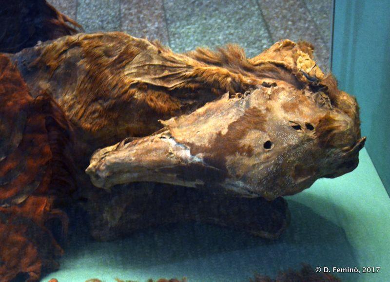 Mummified horse