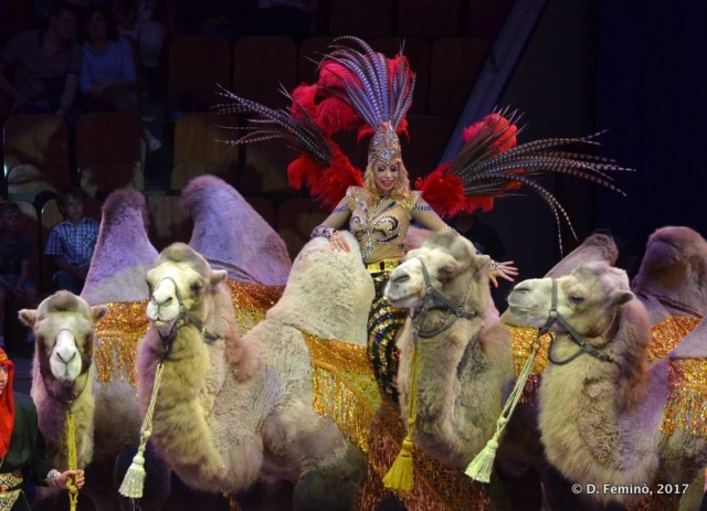 Lady of the camels (Circus, Tyumen, Russia, 2017)