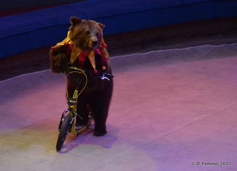 Poor bear... (Circus, Tyumen, Russia, 2017)