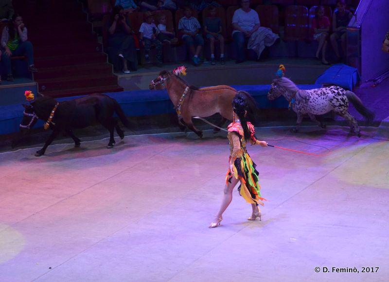Pony tamer (Circus, Tyumen, Russia, 2017)