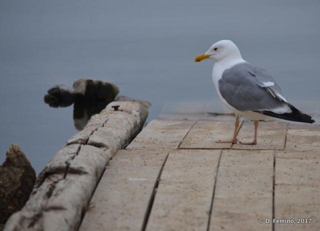 Seagull on the dock (Khuzhir, Russia, 2017)