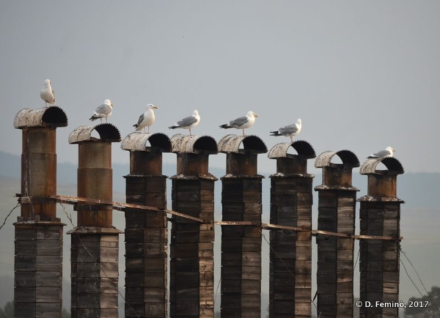 Seagulls on the poles (Khuzhir, Russia, 2017)