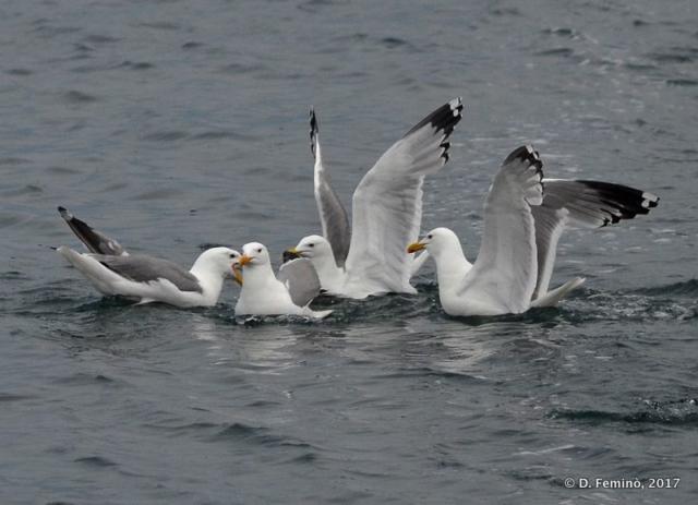 Seagulls (Lake Baikal, Russia, 2017)