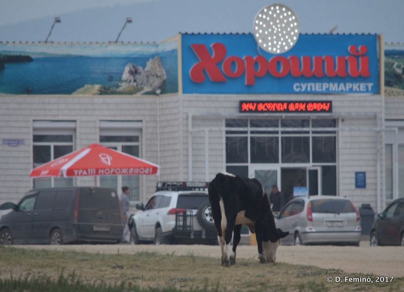 Supermarket and cow (Khuzhir, Russia, 2017)