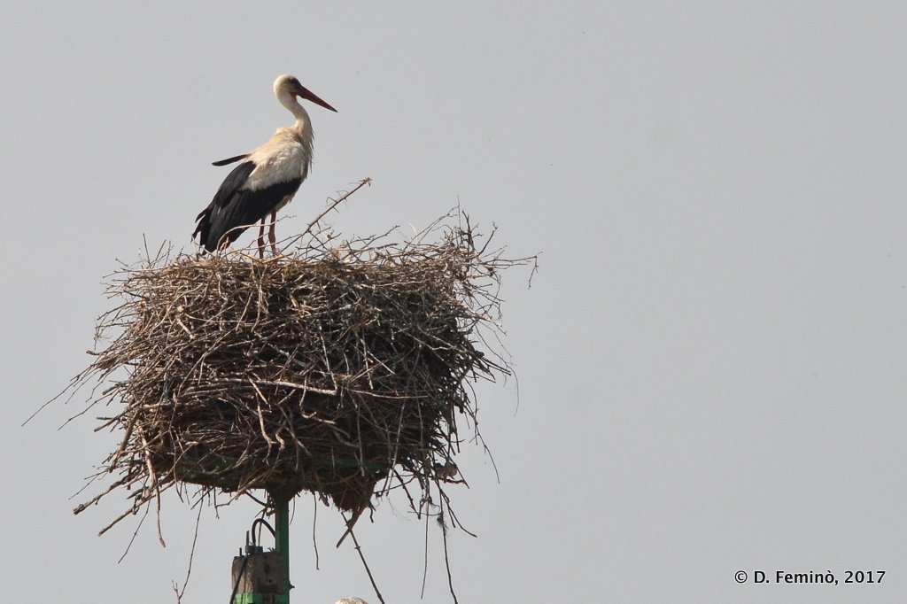 Sulina channel, stork on the nest
