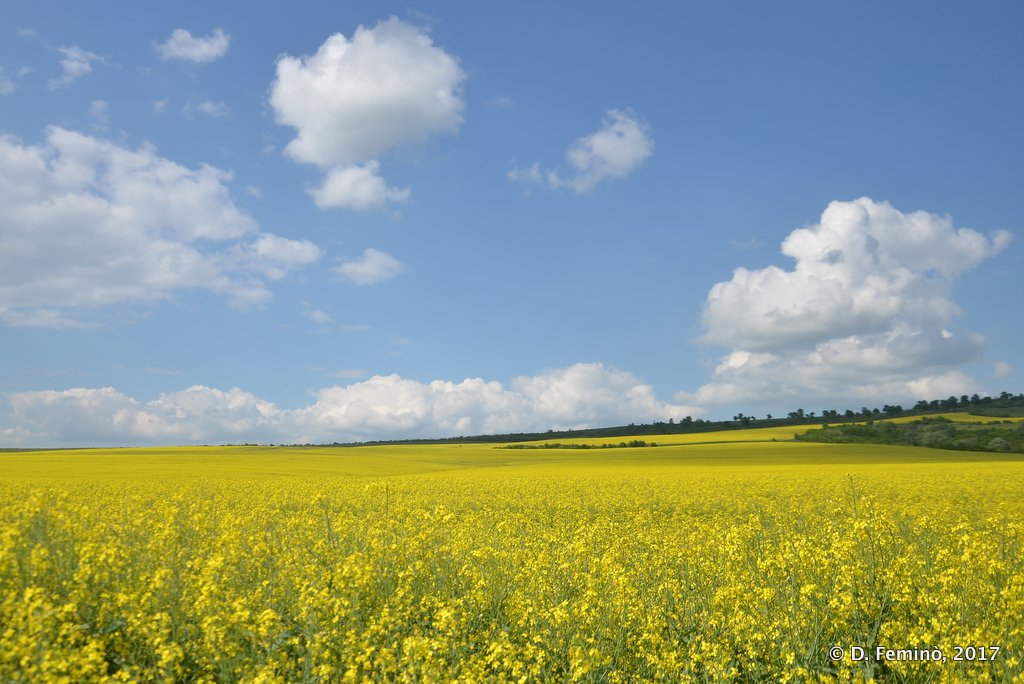 Romania: white clouds, yellow fields and blue sky