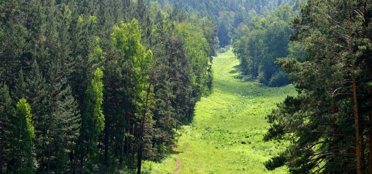 Stolby reserve