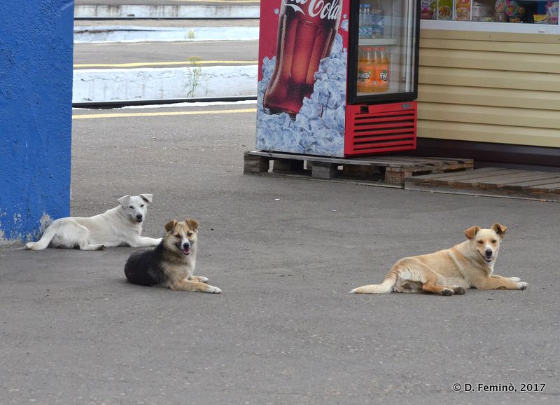 Dogs seen during a long stop