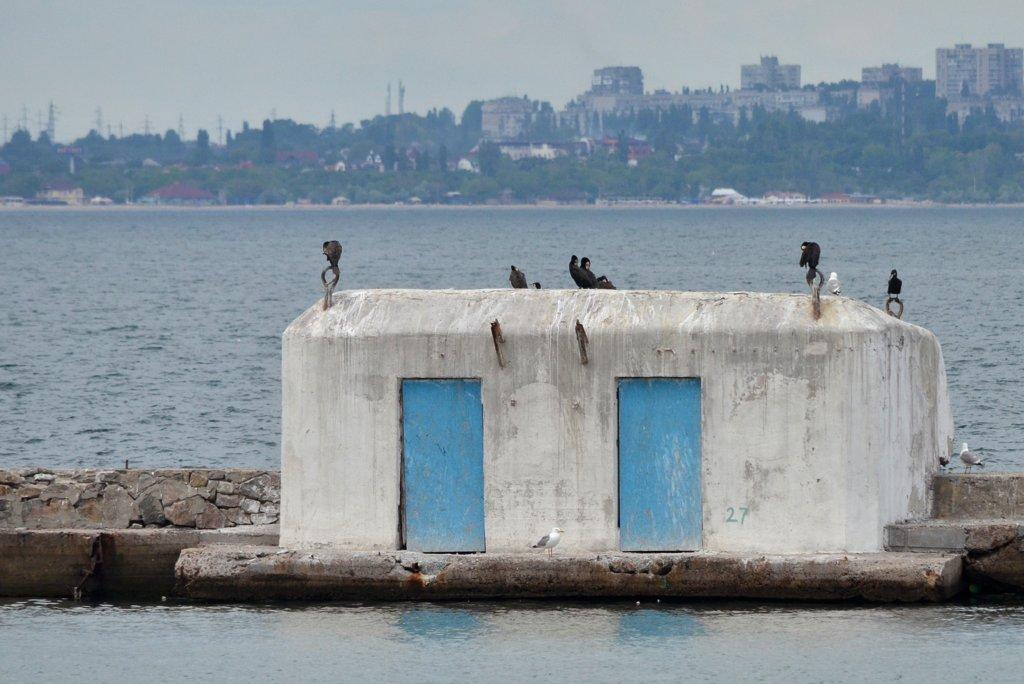 Odessa, Cormorants at the port