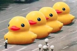Tienanmen ducks (unknown author)