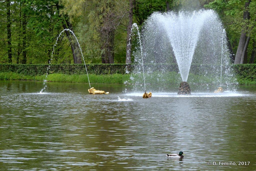 Peterhof, Fountain in lower park