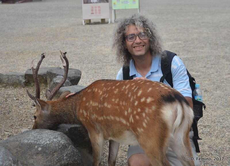 Me with one of the thousand deer of Nara