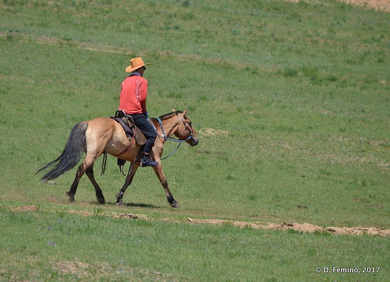 A local cowboy (Terelj Park, Mongolia, 2017)