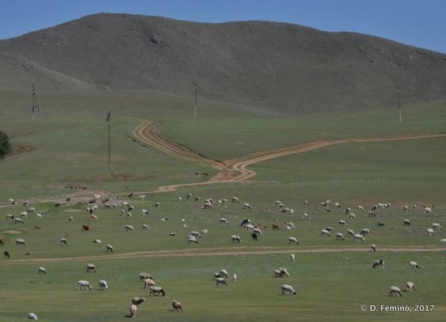 Cattle (Terelj Park, Mongolia, 2017)