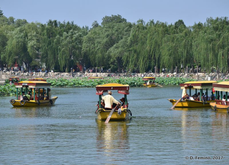 Boats among the lotus flowers