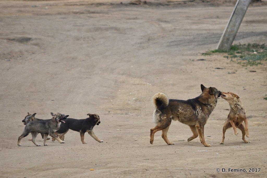 Khuzhir, Happy dog family